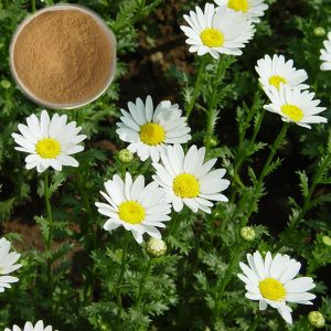 parthenolide-feverfew-extract