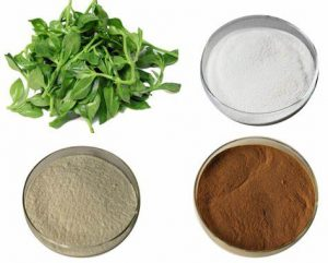 Andrographis Paniculata Extract Powder